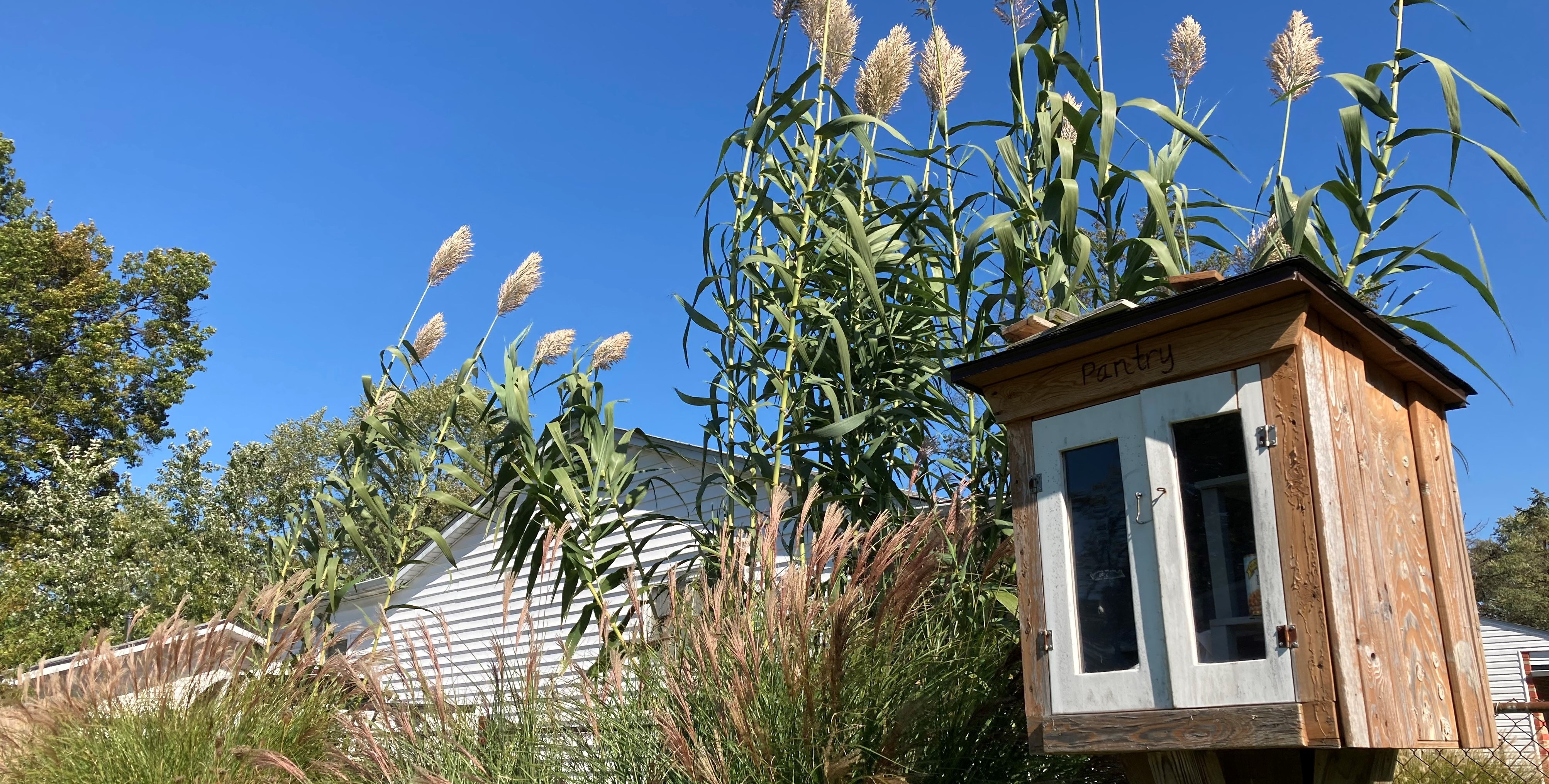 Fall ornamental grasses decorate the Case Rd. Community Garden near the free Little Pantry.